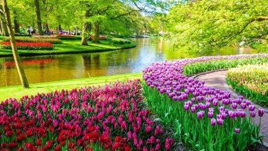 Photo of 12 دلیل برای سفر به هلند
