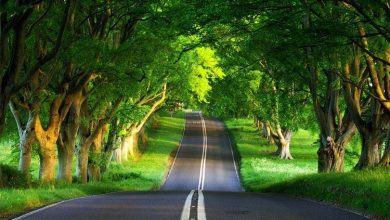 Photo of زیباترین جاده های دنیا که برای همیشه در خاطر شما می ماند