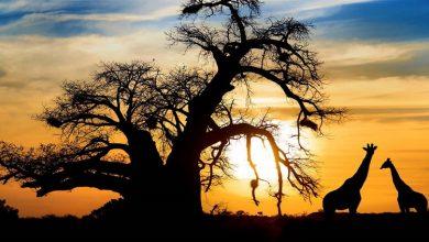 Photo of 10 دلیل برای سفر به افریقا