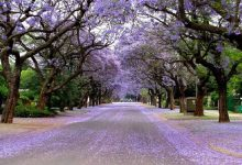 Photo of جاذبه های گردشگری پرتوریا، آفریقای جنوبی