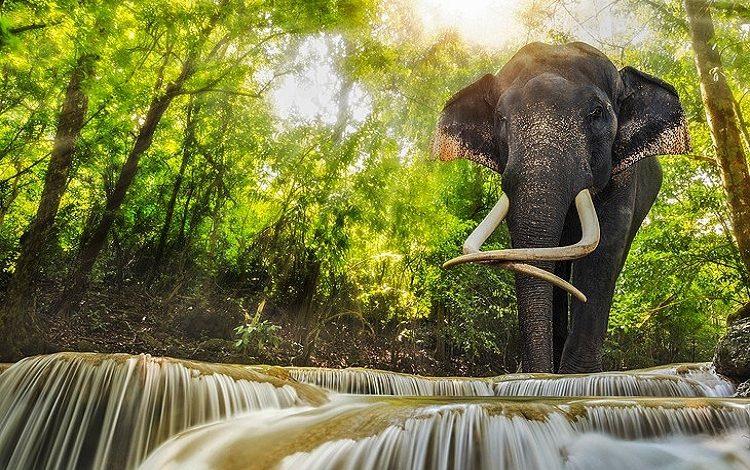 Photo of یازده مکان دیدنی کانچانابوری در تایلند