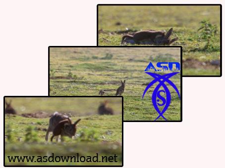 دانلود کلیپ مستند از حیاط وحش کره زمین-چرخش توازن قوا