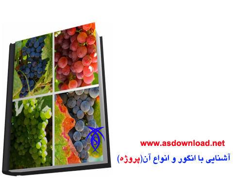 تحقیق در مورد انگور برای پروژه و پایان نامه دانشجویی