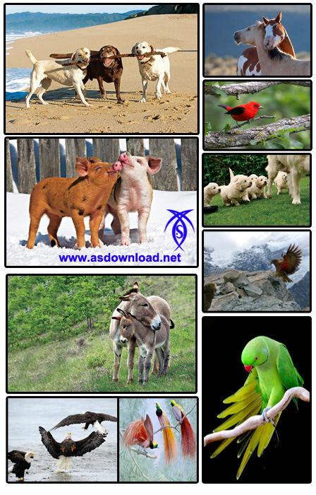 دانلود 60 والپیپر جدید از حیوانات و پرنده گان برای موبایل-download wallpaper
