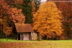 forest_house_