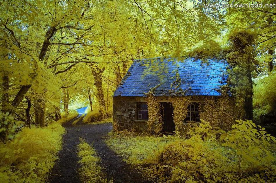 Top 10 Most Beautiful Forest Houses-دانلود عکس زیباترین خانه های جنگلی در جهان