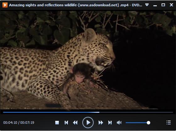 Amazing wildlife دانلود مستند شگفتی های حیات وحش