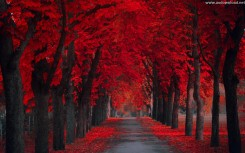 beautiful pathway red wallpaper