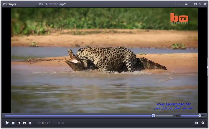 دانلود کلیپ شکار تمساح توسط پلنگ