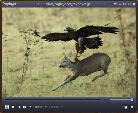 Deer Hunting by Eagle