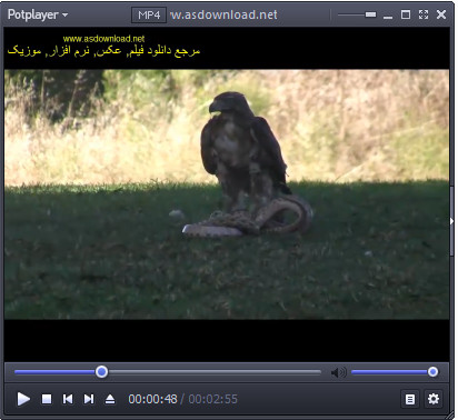 Hunting snake by Eagle