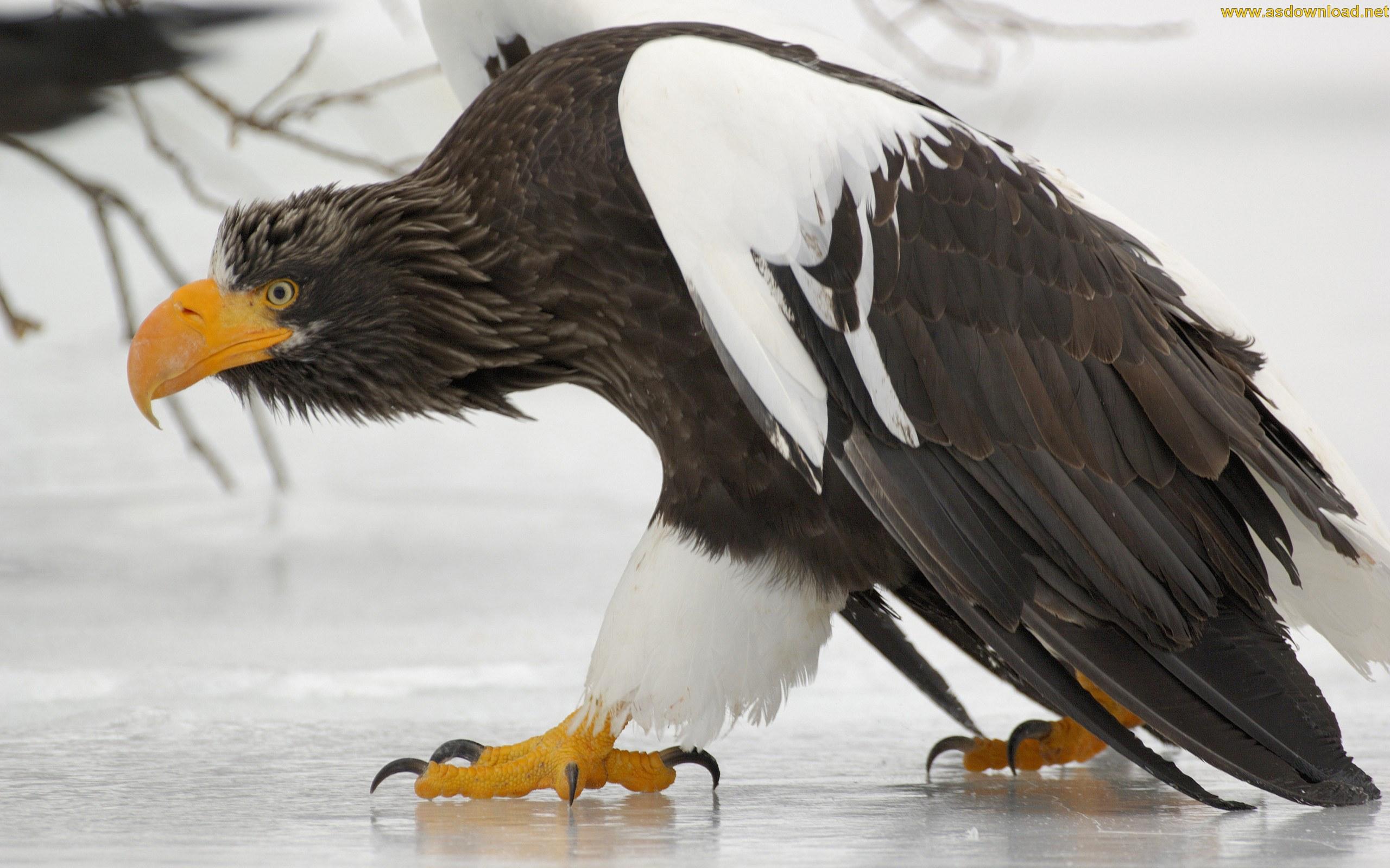 دانلود والپیپر عقاب با کیفیت hd
