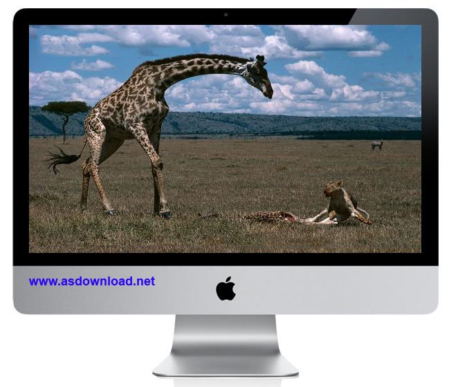 giraffe kill lion