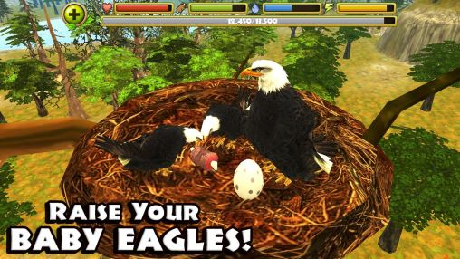 2_eagle_simulator