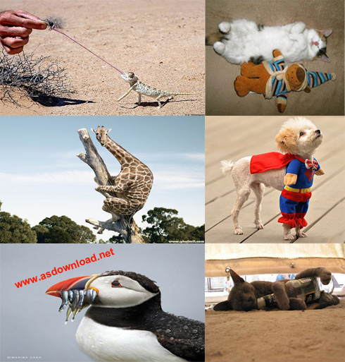 Funny Movement of Animal 2014