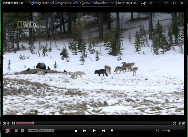 Wolves vs Grizzly Bears-National Geographic WILD (2)