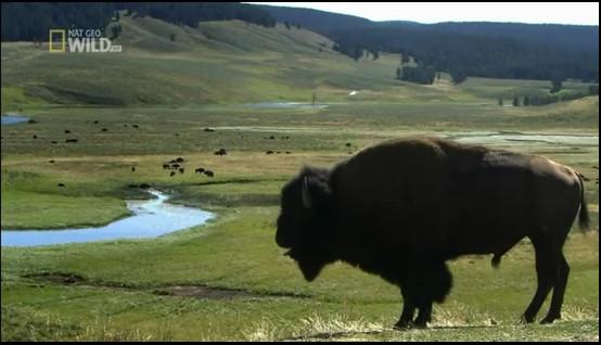 دانلود فیلم مستند خرس ها و گرگ ها-محصولی از نشنال جئوگرافیک