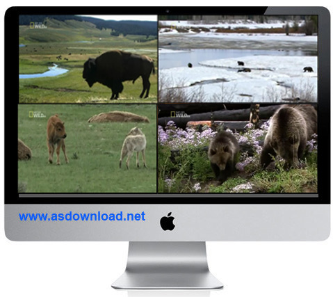 Photo of دانلود فیلم مستند خرس ها و گرگ ها-محصولی از نشنال جئوگرافیک