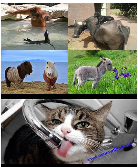 دانلود کلیپ حرکات عجیب حیوانات بامزه 2014