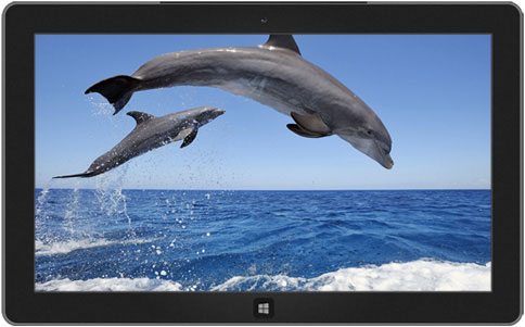 Dolphins theme windows 8-دانلود تم دولفین برای ویندوز 8