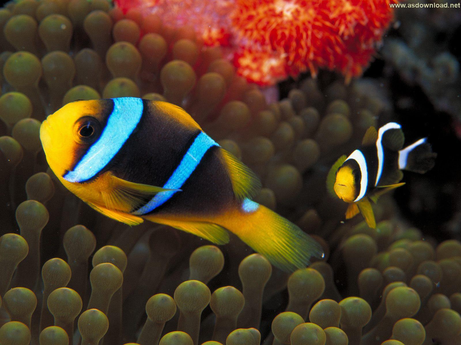 دانلود والپیپر انواع ماهی رنگارنگ و زیبا