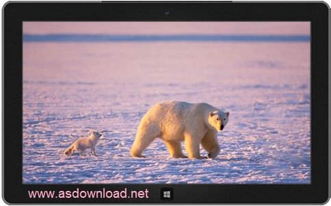 Arctic theme windows- دانلود تم حیوانات قطبی برای ویندوز 8 و 7