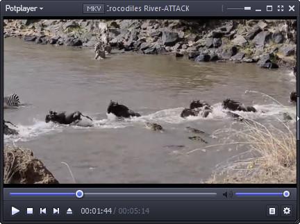 کلیپ مستند حیات وحش رودخانه کروکودیل ها