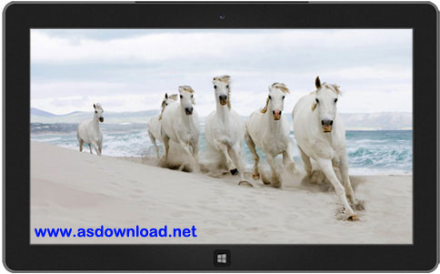 Horses theme for windows 7, 8, 10