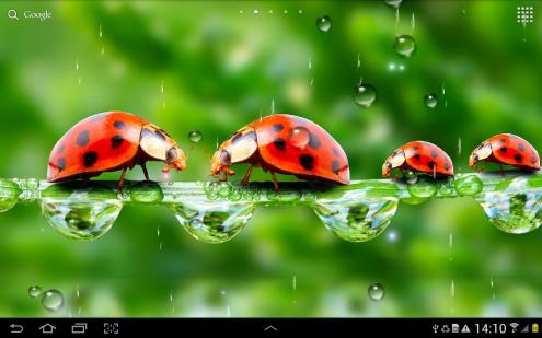 Rain Live Wallpaper-1