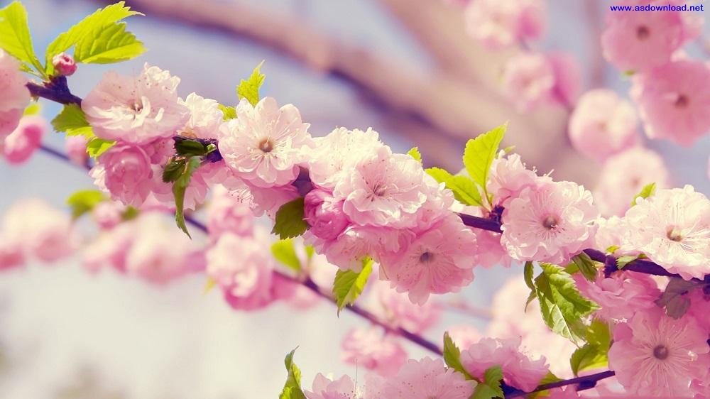 دانلود عکس های بهاری از طبیعت زیبا و عیده نوروز 1950*1200