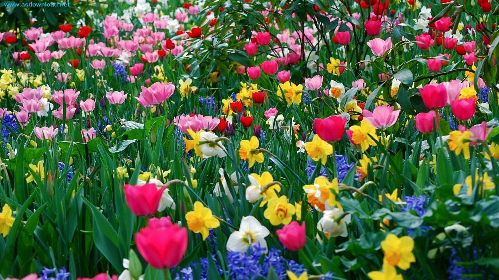 spring_season-wallpaper (19)
