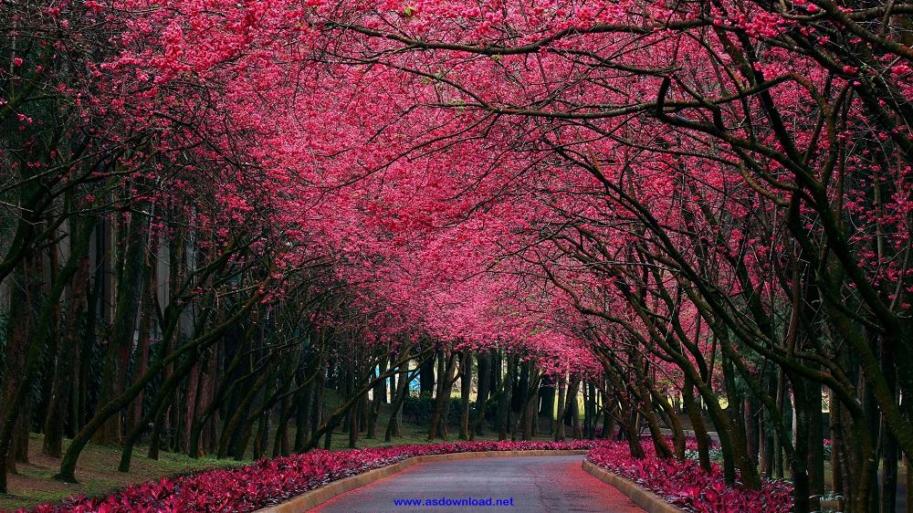spring_season-wallpaper (22)