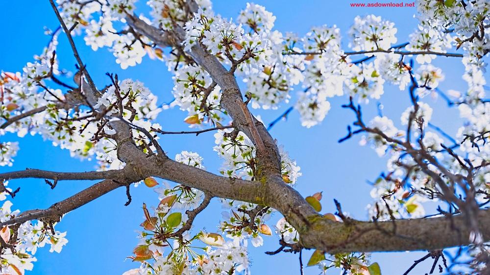 spring_season-wallpaper (6)