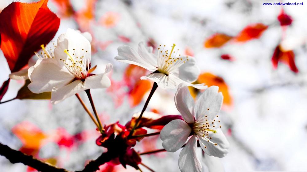 spring_season-wallpaper (8)