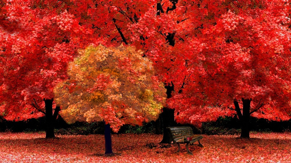 Red-Autumn-Trees-Park-Wallpaper