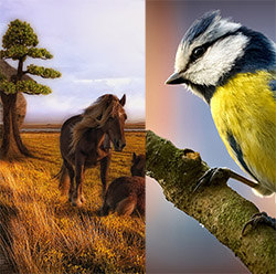 دانلود والپیپر اندروید با موضوع حیوانات