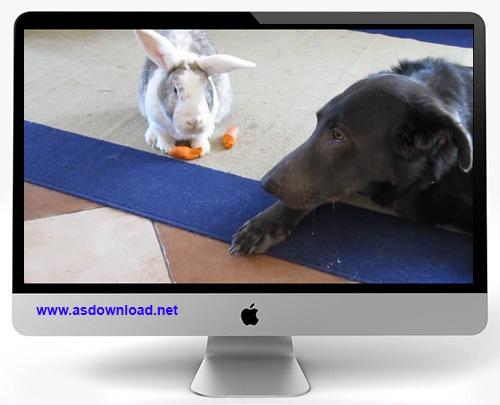 دانلود کلیپ جالب از حسادت سگ به خرگوش