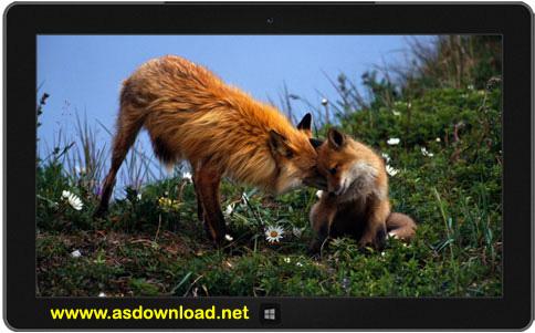 دانلود تم حیوانات رمانتیک برای ویندوز 7 و 8