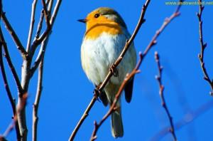 دانلود عکس hd از زیباترین پرنده گان