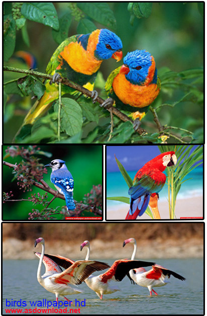 دانلود و الپیپر پرنده گان زیبا و رنگارنگ- birds wallpaper hd