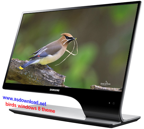 birds windows 8 theme- دانلود تم پرنده گان رنگارنگ برای ویندوز 8 و 7