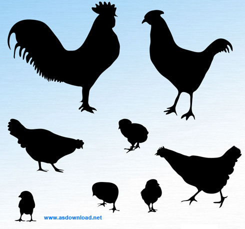 دانلود shapes مرغ و خروس برای فتوشاپ