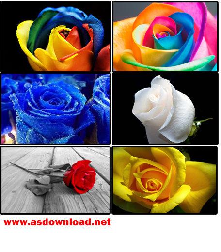 دانلود آلبوم عکس گل رز