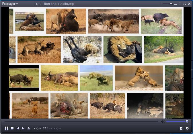 دانلود فیلم مستند از حیات وحش- شیرها و بوفالو ها