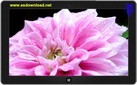 Photo of دانلود تم فانتزی گل های فوق العاده برای ویندوز 8