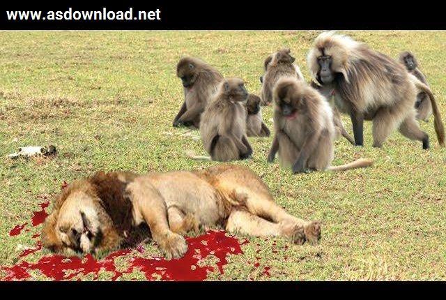 دانلود فیلم مستند 10 نبرد میمون گوشت خوار