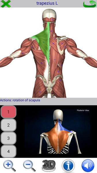2 Visual Anatomy 2