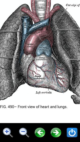 دانلود Visual Anatomy 2 - نرم افزار آنتومی و فیزیولوژی بدن برای اندروید