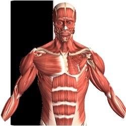 دانلود Visual Anatomy 2 3.0 - نرم افزار آنتومی و فیزیولوژی بدن برای اندروید