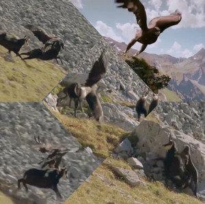 دانلود فیلم مستند نبرد حیرات انگیز عقاب و بز کوهی با کیفیت HD